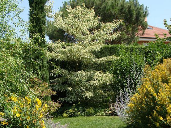 Paysagiste, Genève, parc, jardin, clôture